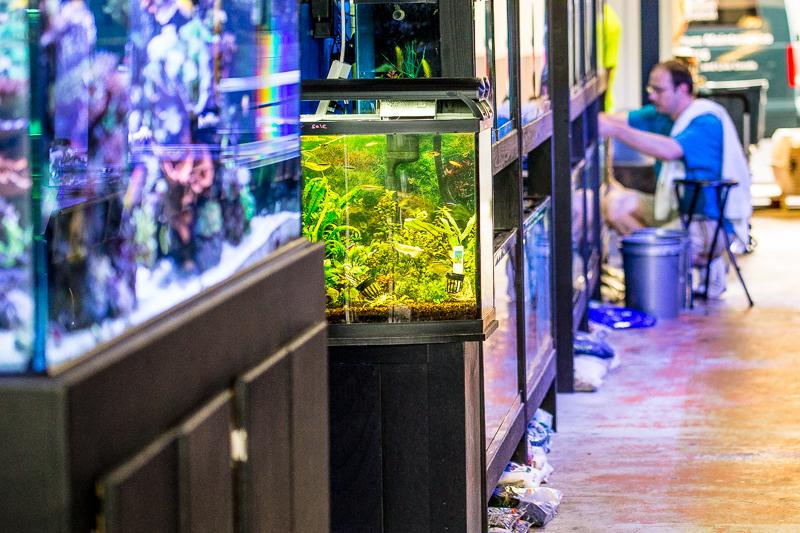 The Premium Aquarium Salem Oregon Aquarium Store Fish