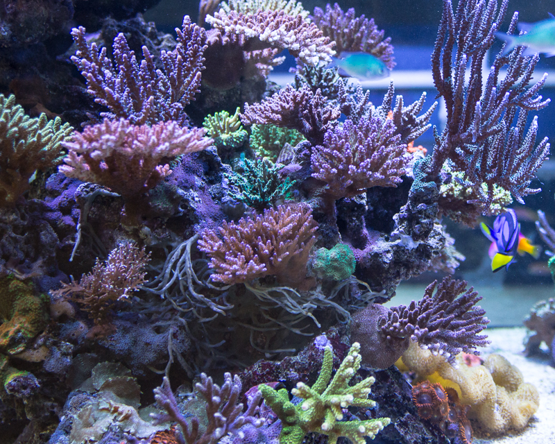 amazing selection of coral